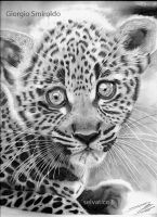 Baby Leopard by selvatico3