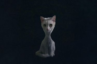 Surreal Cat 01 by tea
