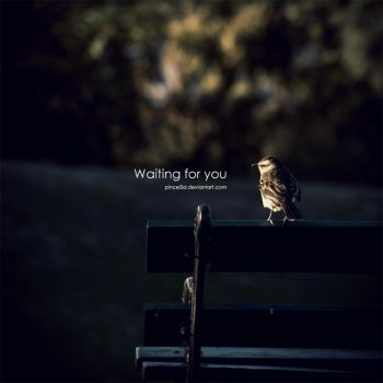 Waiting for You - Little bird by pincel3d
