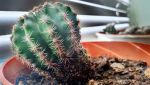 Cactus time :D by idlebg