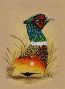 Ring-necked Pheasant by autumn-rains