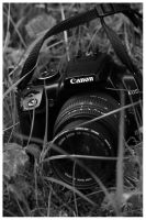 Camera In The Grass by bcdirector