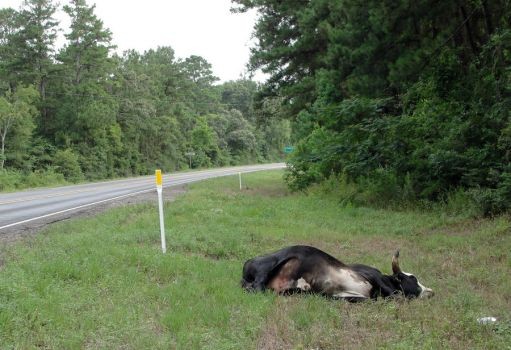 Roadkill...Texas Style by stealthpaws