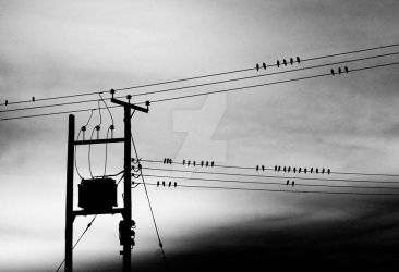 Birds by tpphotography