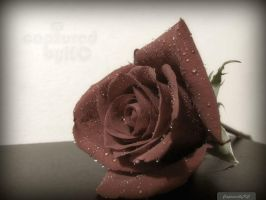 Rose With Raindrops by capturedbykc