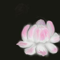A lotus by CrazyCAN