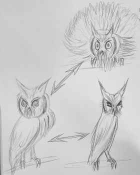 Sketche for Northern white-faced owl  3 form for 1 by Jia-Horizon-Artworks