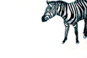 Drawing of a zebra. Illustration by oanaunciuleanu