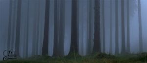 Foggy Forest by PassionAndTheCamera