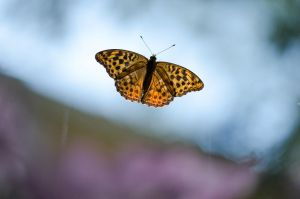 Orange Butterfly by LudwigSpove
