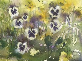 Pansies by tracybutlerart