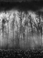 Brooding Boughs by SheWalksInSilence