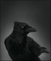 The Raven by ReneAigner