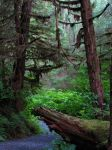Tongass National Forest 1 by ShadowsStocks