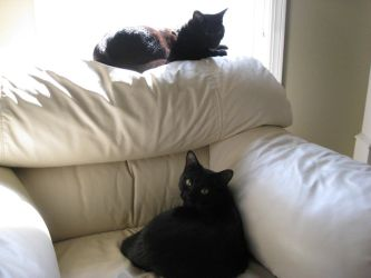 two black cats by cat55