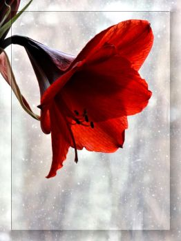 Something red. by Yancis