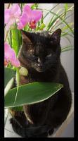 Cat with Orchid by evaPM