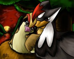 Staraptor and Pidgeot - Valentines day