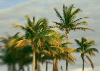 The Sun and The Palms by editordistriktmag