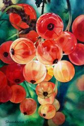 Red currant by Takir