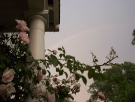 rainbow and roses by Pooleside