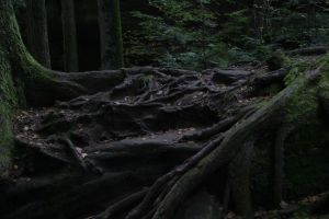 Tree Roots at Old man's cave by livingindarkness