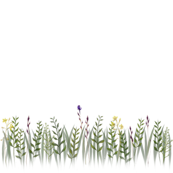 grass flowers 4 trans png by dementiaRunner