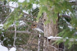 Squirrel by MauserGirl