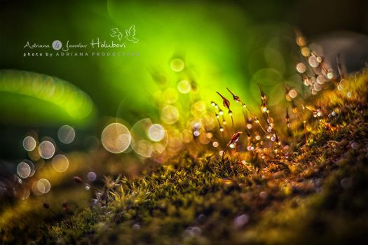 moss by AdrianaKH-75