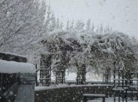 Utah Snow Pic 6 by JCServant