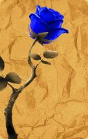 Blue Rose Old Paper 2 PSD by wsaconato