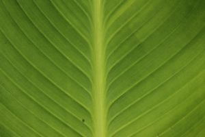 Leaf Texture 5 Stock by wuestenbrand