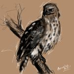 Redtail Hawk by Anandahbee