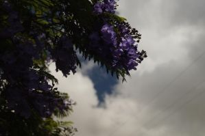 Blooming on Trees by thatoneangelfish