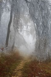 Frost-on-trees by Jantiff-Stocks