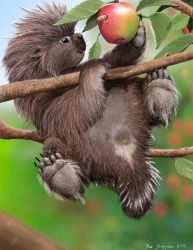 Baby Porcupine Loves MacIntosh Apples by Psithyrus