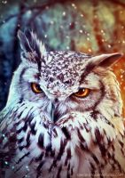 The wise Owl by Anhyra