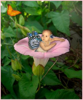 Baby Butterfly by Tigress83