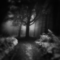 -Waiting in the end of the road- by Janek-Sedlar