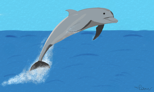 A Dolphin by DoctorTM