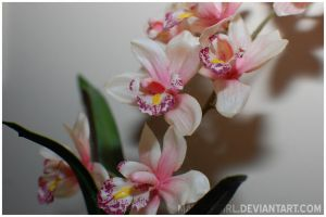 Plastic Orchids by MauserGirl
