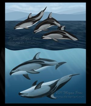 Pacific White-Sided Dolphins by AquaOrca