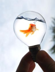 Light Bulb Fish by Silent-Night-Howler