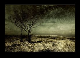 OneTwo Tree by raun