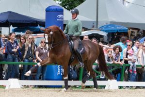 Chestnut WB High Forearm Extended Trot Spectacular by LuDa-Stock
