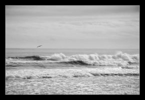 Wind Surfer by clarson04