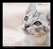 Kitten Closeup by wazabees