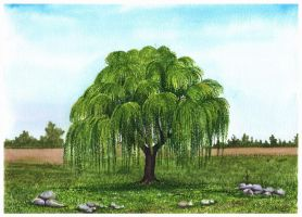 Weeping Willow by aakritiarts