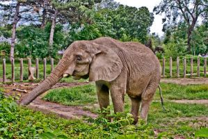 HDR elephant by ando-san