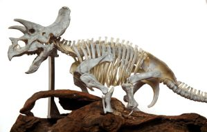 Triceratops LG3 by hannay1982